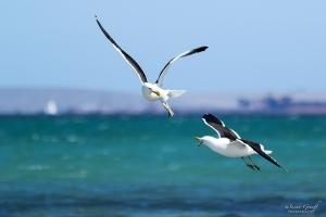 Langebaan West Coast South Africa Beach Retreat Holiday Accommodation