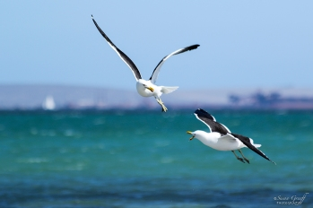 Langebaan West Coast South Africa Beach Retreat Holiday Accommodation